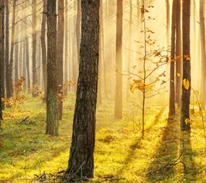 syksyinen metsä
